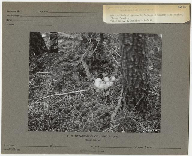 Wildlife Homes: Nests and Dens - All States