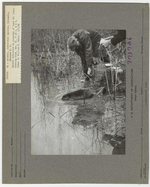 Wildlife Live Trapping - Beaver - All States