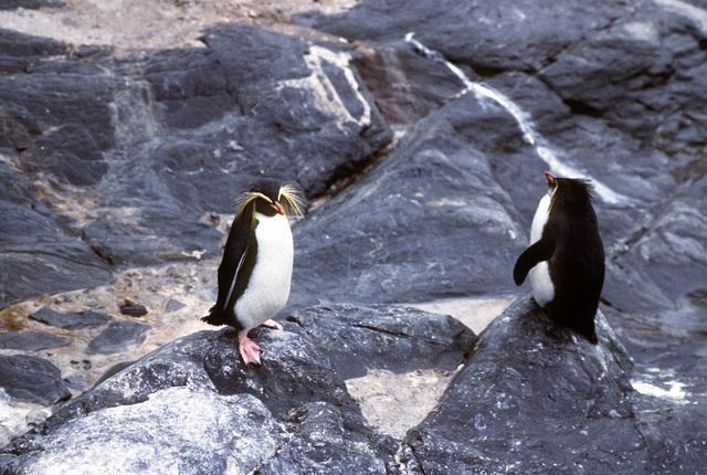 Penguins at the Bergen Aquarium