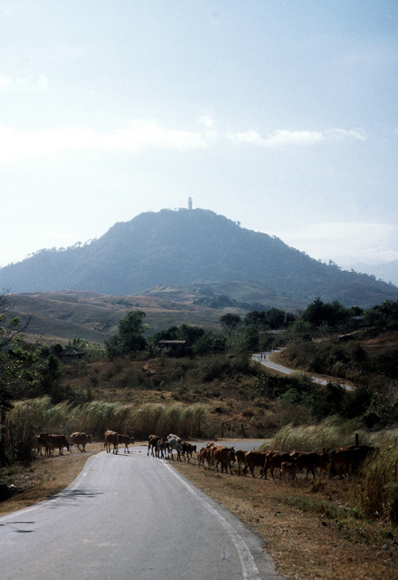 Mount Santa Rita with the U.S. naval communications station at its peak as cattle cross the narrow, winding road at its base