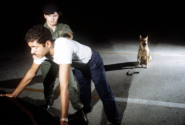 A German shepherd, a graduate of the Department of Defense Center, stands guard during a search and seizure operation