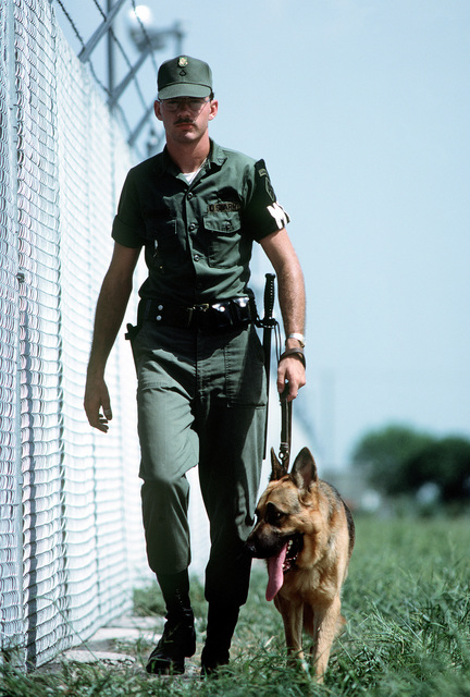 A German shepherd, a graduate of the Department of Defense Center, walks the post perimeter with his handler PVT Alton V. Bailey