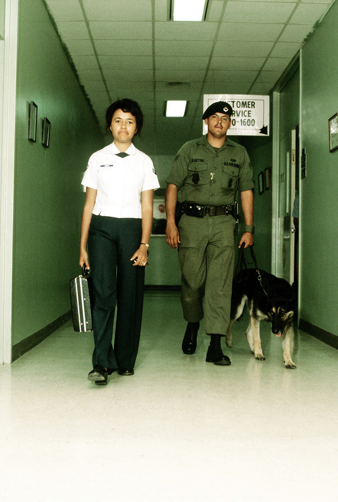 A patrol dog, a graduate of the Department of Defense Center, provides escort service