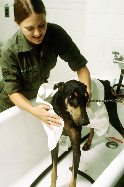 SGT Cindy Salinas gives a Doberman pinscher a medicated bath at the Department of Defense Center
