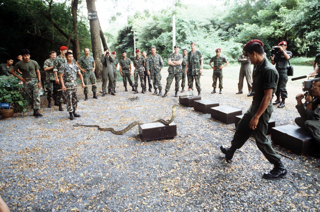 United States Air Force personnel observe a live demonstration during a lecture on snake identification given by members of the Royal Thai Army Special Forces (RTASF). The airmen are participating in jungle survival cross-training with the RTASF