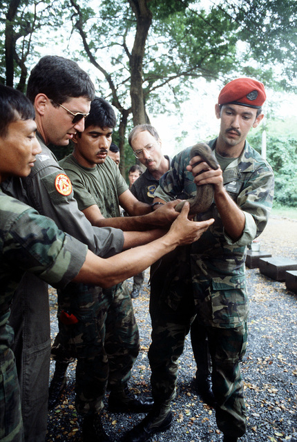 U.S. Air Force personnel handle a live snake during a lecture on snake identification given by members of the Royal Thai Army Special Forces. The airmen are participating in jungle survival cross-training with the RTASF