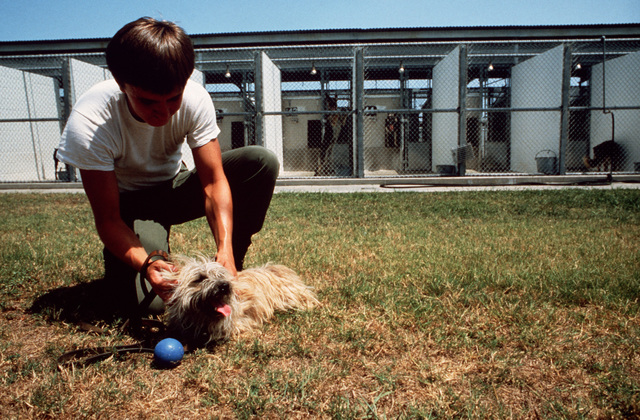 A dog handler from the 3282nd Technical Training Squadron of the Air Force Security Police Academy attaches a leash to a dog undergoing drug and explosives detection training. The 3282nd trains patrol, drug detection, and explosives detection dogs for all the military services and other government agencies