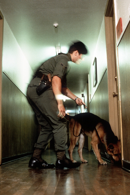 A dog sniffs at the door of a dormitory where samples have been placed during drug detection training by the 3282nd Technical Training Squadron of the Air Force Security Police Academy. The 3282nd trains patrol, drug detection, and explosives detection dogs for all the military services and other government agencies
