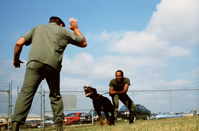 Dog handlers from the 3282nd Technical Training Squadron of the Air Force Security Police Academy train a dog to bite. The 3282nd trains patrol, drug detection, and explosives detection dogs for all the military services and other government agencies
