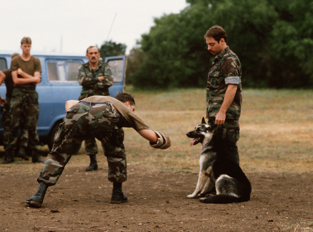 Dog handlers from the 3282nd Technical Training Squadron of the Air Force Security Police Academy train a German shepherd to respond to the attack command. The 3282nd trains patrol, drug detection, and explosives detection dogs for all the military services and other government agencies