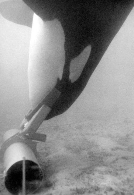 Ahab, a 5,500-pound killer whale, recovers a piece of inert ordnance using an acoustic pinger to guide him during the Deep Ops project. The whale is also equipped with a grabber device and a hydrazine system to allow the object to float easily to the surface