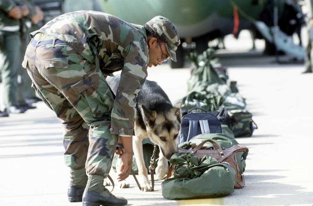 Security policeman Troy Brashear of 6171st Air Base Squadron encourages his drug detection dog to inspect luggage during an Operational Readiness Inspection (ORI)