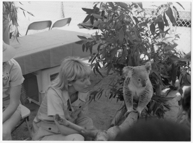 Koala Bear, Wild Animal Park, Arbor Day