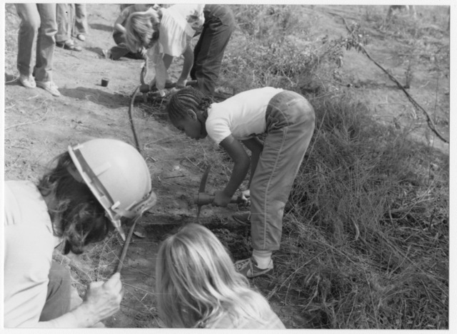 Young People Assisted by a California Conservation Corps Worker Plant Eucalyptus Trees