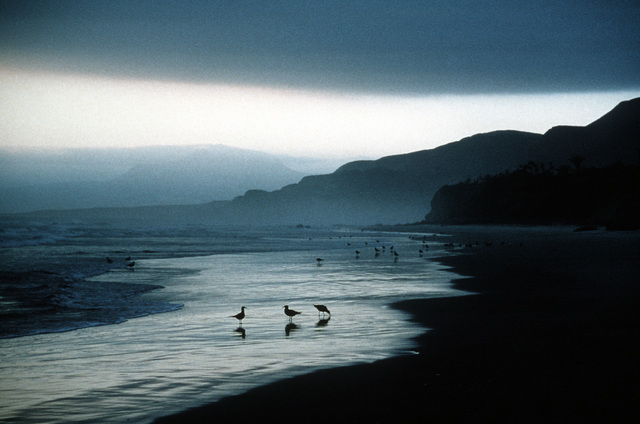 A California beach scene with sea gulls. Exact Date Shot Unknown