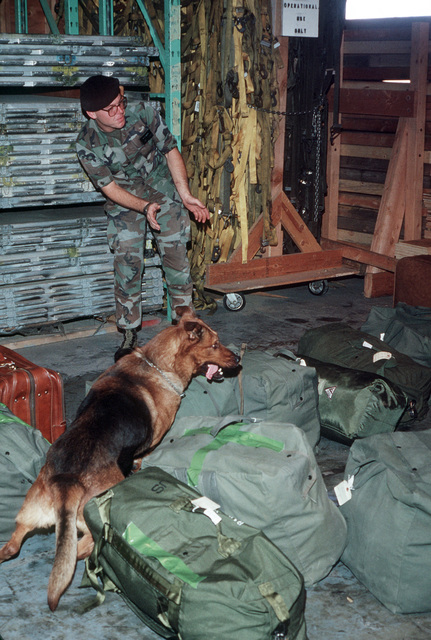 AIRMAN First Class (A1C) Dale Bronson and his German shepherd dog, Bandit, 831st Security Police Squadron, search duffle bags for drugs before equipment is loaded onto an aircraft for transport to Egypt and Exercise CORONET TITAN
