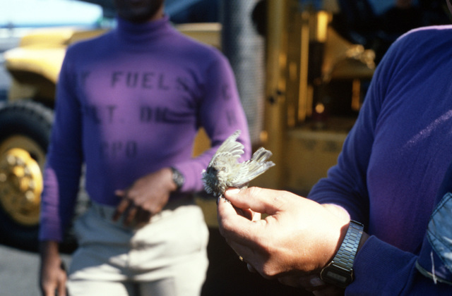 A crewman holds a small bird caught on the flight deck of the nuclear-powered aircraft carrier USS DWIGHT D. EISENHOWER (CVN 69). Birds landing on the ship are a hazard during flight operations. The bird will be placed in a cage and released in port