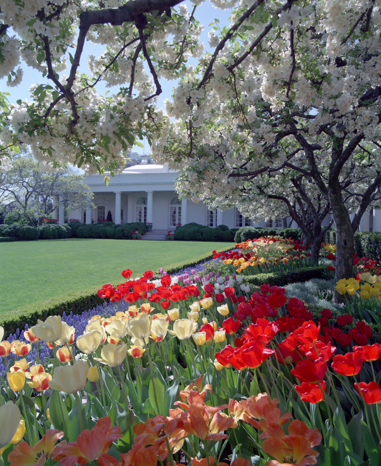 Image result for the white house rose garden