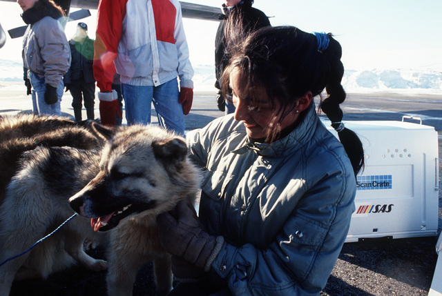 Margrethe Olsen says good-bye to one of 230 sledge dogs bound for Thule Air Base and then to the village of Quanaag, where the entire local population of Huskies was wiped out by a distemper epidemic.  The 109th Tactical Airlift Group of the New York Air