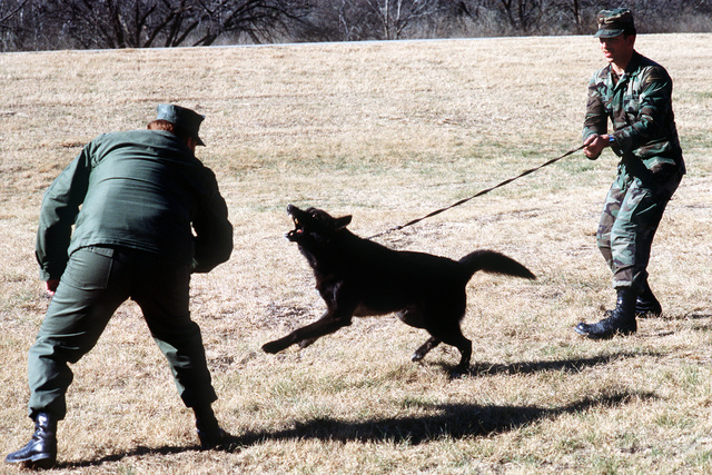 CHIEF PETTY Officer John Winfrey, left, and Army SGT. Robert Geiger take part in a dog handling/controlled aggression exercise at the Security Police Academy. The school provides fundamental courses in law enforcement and security duties for Air Force personnel as well as advanced training to security police of all ranks and branches of the armed services