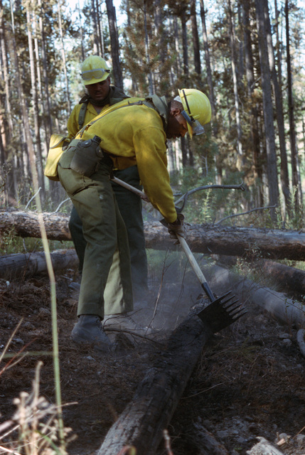 Members of the 4th Battalion, 23rd Infantry Regiment, build fire lines during the firefighting efforts in Yellowstone National Park