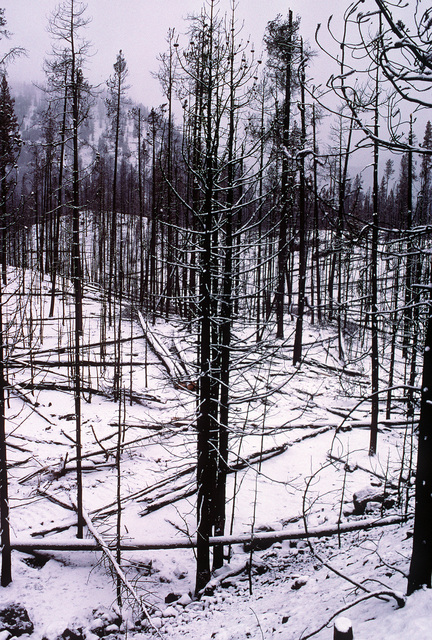 A light blanket of snow covers a portion of the more than one million acres of forest burned in Yellowstone National Park. Army soldiers from Fort Lewis, Washington, and Marines from the 5th Marine Regiment have joined civilian volunteers in battling the