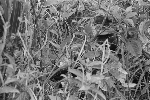 A Marine from the 9th Expeditionary Brigade camouflaged and concealed in underbrush maintains a defensive position during a field operation