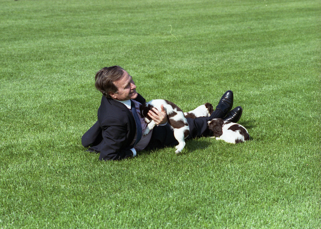 President Bush Plays with Millie and her Puppies on the Lawn of the White House