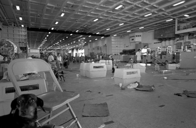 The hangar bay aboard the nuclear-powered aircraft carrier USS ABRAHAM LINCOLN (CVN 72) serves as a temporary shelter for pets of military personnel and dependents being evacuated from Clark Air Base and Naval Station, Subic Bay. Evacuees are being transported from the area in the aftermath of the eruption of Mount Pinatubo, a volcano that came alive on June 10th for the first time in over 600 years