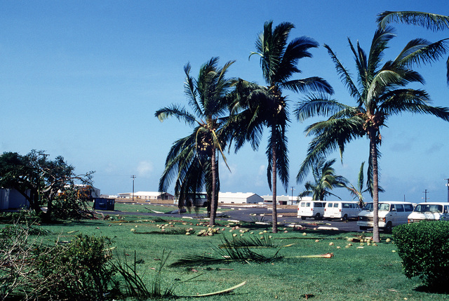 Palm branches and coconuts litter the ground in the housing area at the Pacific Missile Range Facility in the aftermath of Hurricane Iniki