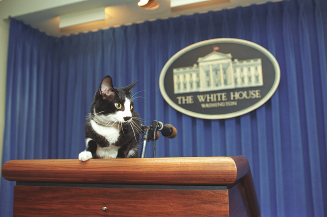 Photograph of Socks the Cat Standing on the Press Podium in the Press Room at the White House