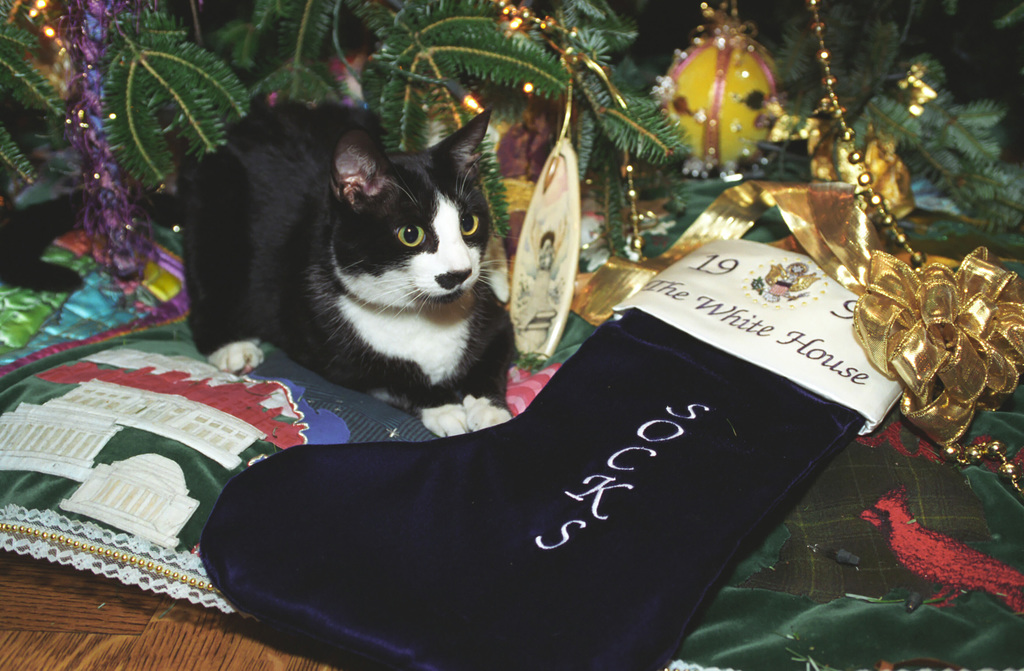 Photograph of Socks the Cat Sitting next to a Christmas Stocking Embroidered with the Name Socks