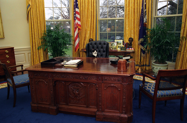 Photograph of Socks the Cat Sitting Behind the President's Desk in the Oval Office