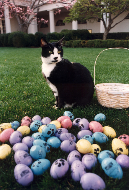 Photograph of Socks the Cat Posing Next to Easter Eggs Decorated with Paw Prints