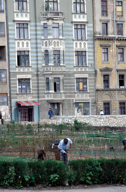 A Bosnian man tends a garden in front of war-damaged buildings