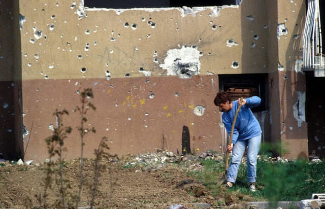 A Bosnian woman tends a garden in front of a war damaged building