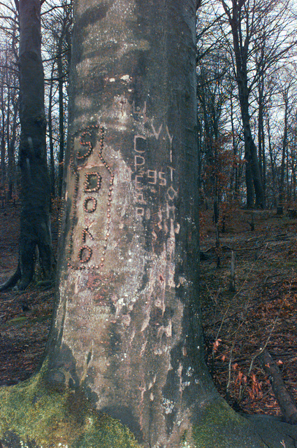 This tree, with markings made out of bullets, was discovered by 2nd Platoon, B Company, 9th Engineers, on a hill outside the town of Plesheim, in the Republic of Srpska, during Operation JOINT GUARD. On December 20, 1996, the Implementation Force (IFOR) mission came to a conclusion and the 1ST Infantry Division was selected to continue serving in Bosnia as part of the new Stabilization Force (SFOR). This decision brought to close the peace mission of Operation JOINT ENDEAVOR and has been the beginning for the current operation known as Operation JOINT GUARD. JOINT GUARD will continue to monitor the militaries of the former warring factions and provide a climate of stability