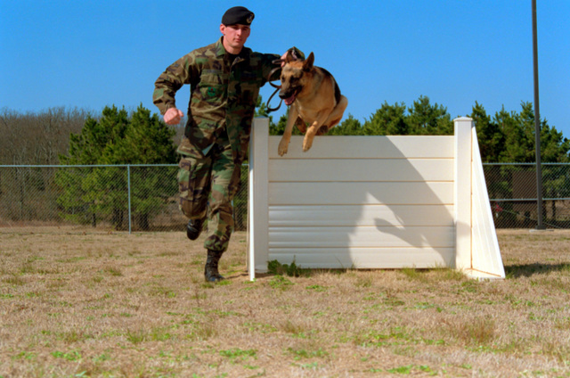 A1C Shawn Conerly and As, both assigned to the 314th Security Forces Squadron, practice for the Department of Defense Worldwide Military Dog Competition held at Lackland AFB, Texas, on April the 24-26