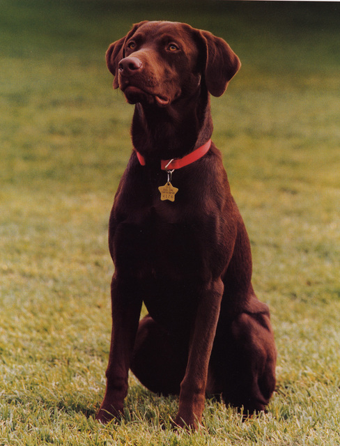 Official Portrait of Buddy the Dog