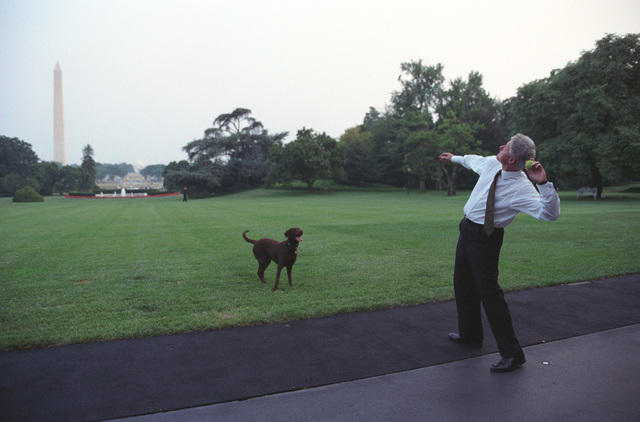 Photograph of President William Jefferson Clinton Throwing a Tennis Ball to Buddy the Dog