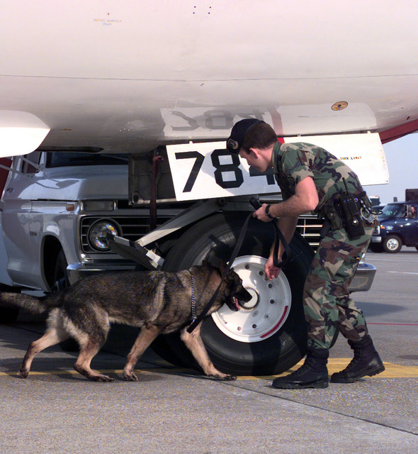 SENIOR AIRMAN Daniel Bechtel, of the 55th Security Force Squadron K-9 Unit, along with his security patrol dog, Paco, conduct routine bomb sniffing prior to flight operations during Exercise GLOBAL GUARDIAN '99