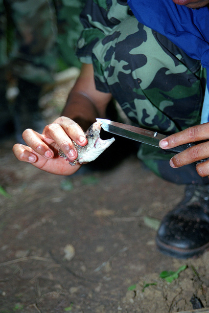 A Royal Thai Army soldier from 2nd Battalion, 15th Infantry Regiment uses the severed head to show the small but dangerous fangs of a King Cobra snake during their Jungle Survival Training for Cobra Gold 2000 in Thong Song, Kingdom of Thailand