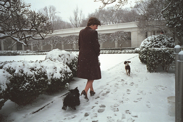 Mrs. Laura Bush Walks through the Snow in the Rose Garden with Barney and Spot