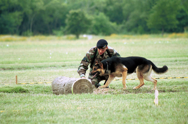 """STAFF Sergeant Robert Pullin, from Goodfellow Air Force Base, gives the command """"down"""" to his military working dog Britt, a German Shepherd dog, on the tactical oabedience course during the Department of Defense Worldwide Military Working Dog Competition"""