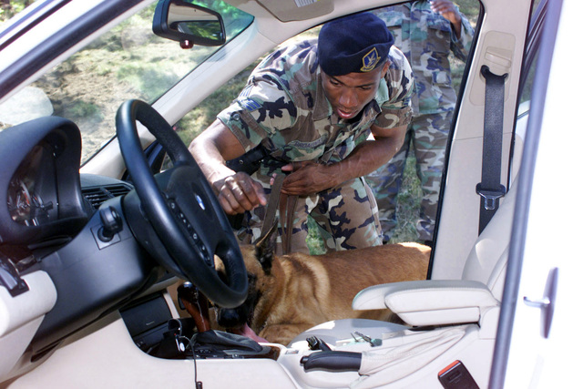 Security increased at Andrews AFB, Maryland, on September 11, 2001, after a terrorist attack on the Pentagon. STAFF Sergeant (SSGT) Broadnax, 89th Security Police Squadron and his guard dog, thoroughly search every vehicle entering Andrews AFB