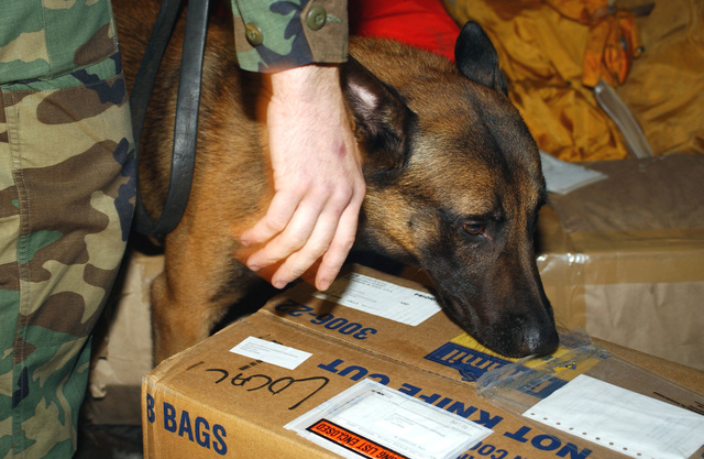 """Practicing his specialty, """"Rico"""", A360, Explosive Detector Dog, 568th Security Forces Squadron, Ramstein Air Base, Germany, sniffs mail from a delivery truck brought to the Northside Post Office"""