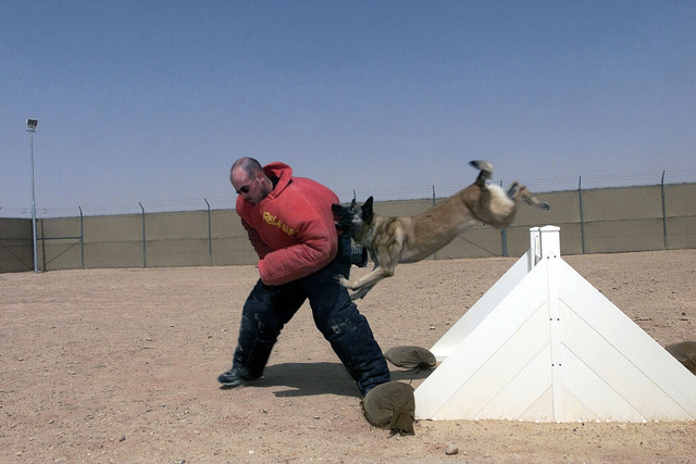 US Air Force (USAF) STAFF Sergeant (SSGT) John E. Gurnot, 363rd Expeditionary Security Forces Squadron (ESFS), plays the role of the decoy and is attacked by Pasja a Military Work Dog, during a training demonstration at Prince Sultan Air Base (AB), Saudi Arabia