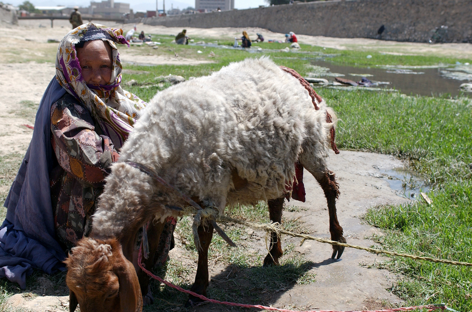 A local Afghan woman lets her goat graze while she washes clothes in