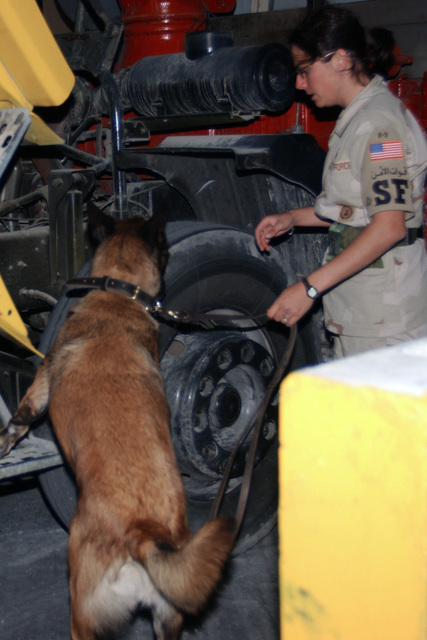 Military Working Dog Duke and US Air Force (USAF) STAFF Sergeant (SSGT) Jennifer Vasquez, 384th Expeditionary Security Forces Squadron (ESFS), search vehicles for possible weapons or contraband at the new search pit at forward deployed location during Operation ENDURING FREEDOM