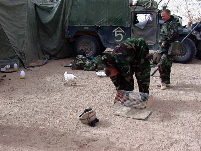 US Marine Corps (USMC) MASTER GUNNERY Sergeant (MGYSGT) Philip J. Corneilson Jr., Military Operations (S-3), 5th Marines, 1ST Marine Division (MARDIV), Camp Pendleton, California (CA), tethers a chicken to its cage. The chicken functions as an early warning device in case of a gas attack during Operation IRAQI FREEDOM. (Substandard image)